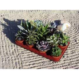 lot de 14 succulentes diam 8.5 cm