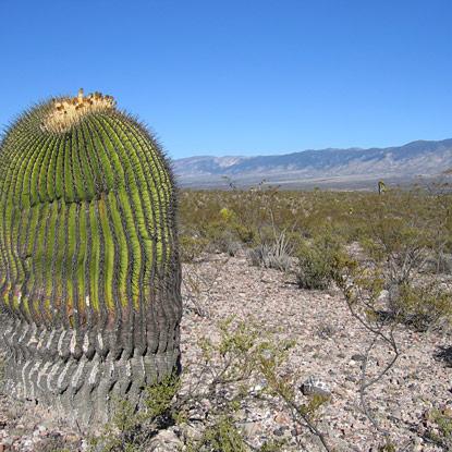 Voyage au pays des cactus